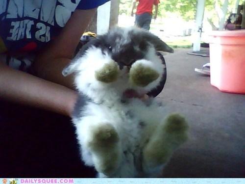 bunny floof happy bunday pet reader squee - 6298223360