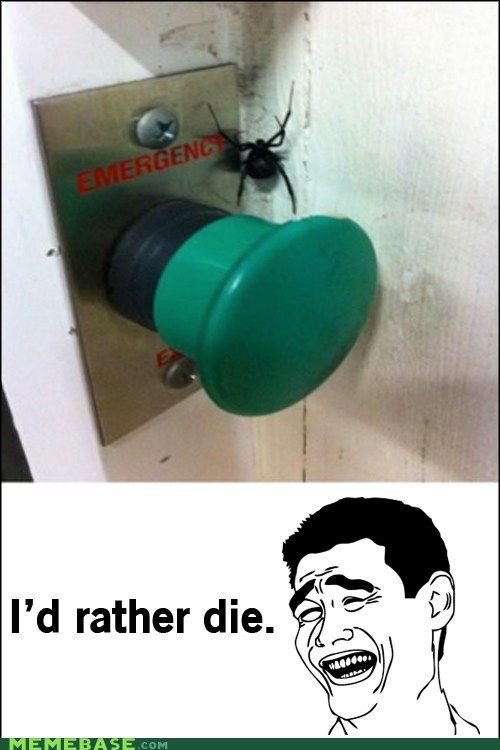 emergency Rage Comics spider - 6298387968