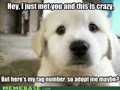 adoption,call me maybe,crazy,dogs,Memes