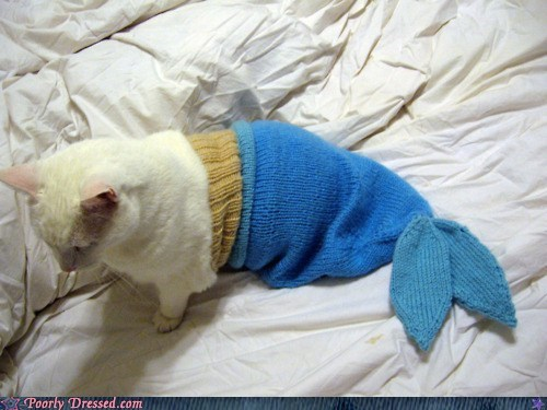 cat Hall of Fame kitteh mermaid pet pet clothing - 6299166976