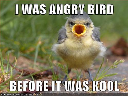 angry angry birds bird cool - 6299181312