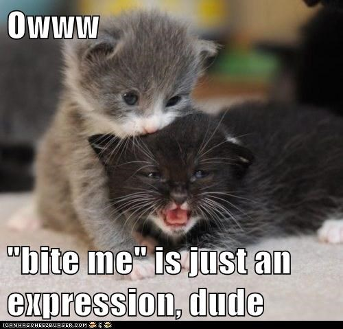 bite bite me biting Cats ear expression expressions head kitten literalism ouch pain phrase tiny - 6299228416