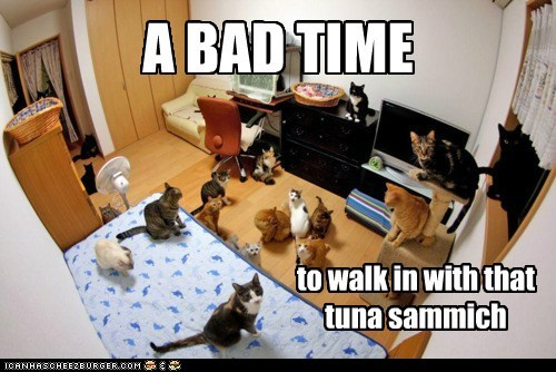 a lot,Cats,food,gang,lolcats,noms,pack,sandwich,tuna,tuna sandwich