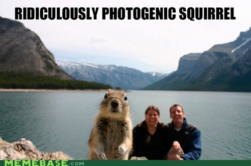 Memes,photogenic guy,squirrel