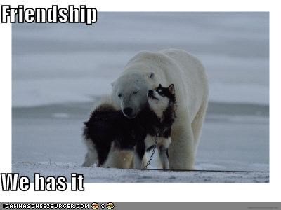 friends husky polar bears snow - 629996800