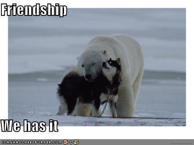 friends husky polar bears snow - 629996800