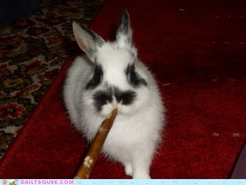 bunny,chew,pet,reader squee,snack,stick
