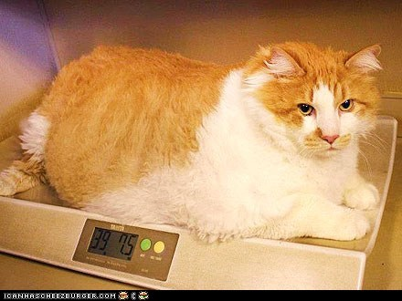 around the interwebs Cats fat garfield obese people pets - 6300057856