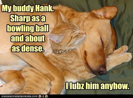 BFFs Interspecies Love friends kittehs r owr friends dumb what breed Cats - 6300139520