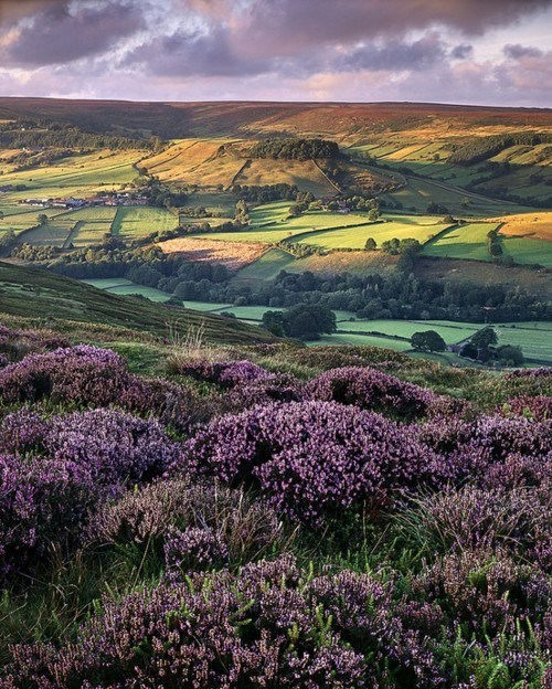 england,fields,flowers,valley