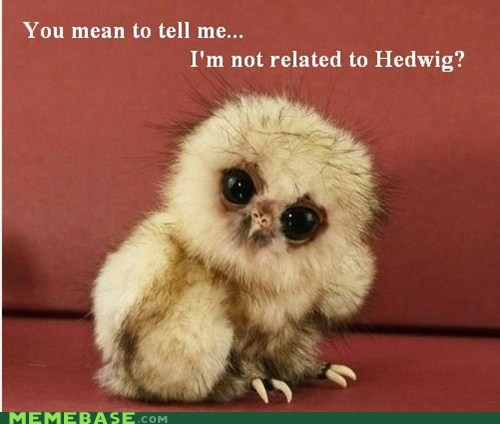 hedwig,Memes,owlet,you mean to tell me