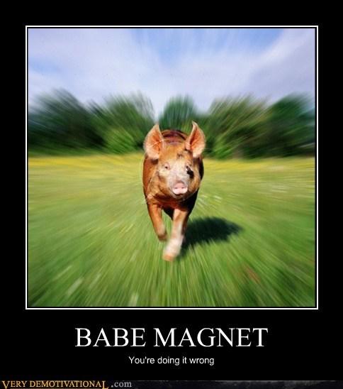 babe hilarious magnet pig wrong - 6300540928