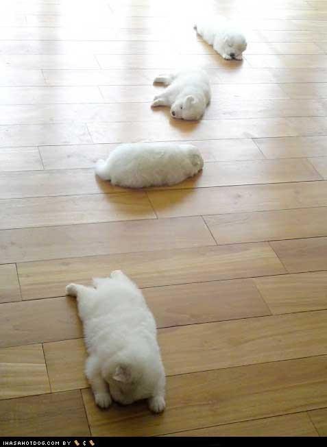 cyoot puppy ob teh day nap puppy sleeping trail - 6300729856