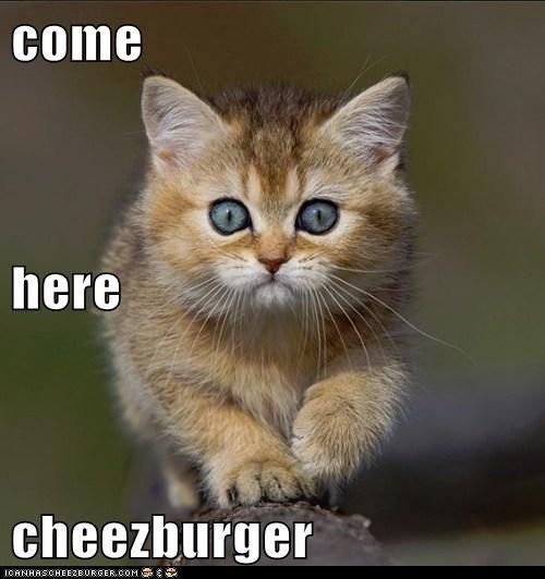 Cheezburger Image 6300817664