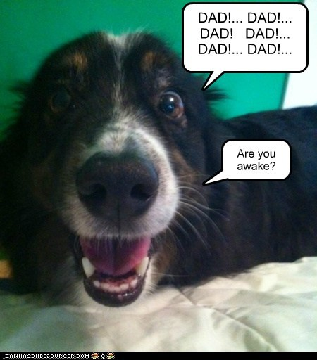 dogs wake up bed dad what breed sleeping - 6301055488