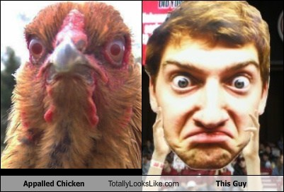 Appalled Chicken Totally Looks Like This Guy