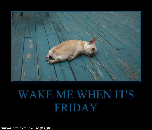 best of the week captions dogs french bulldogs FRIDAY Hall of Fame lie down sleep wake me weekends - 6301710592