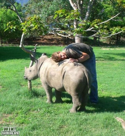 animals,friend,rhino,zoo