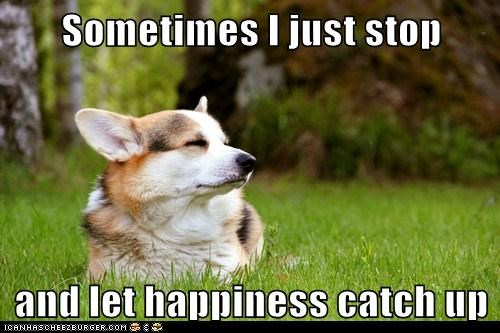 best of the week chillaxin corgi dogs grass Hall of Fame happiness relax