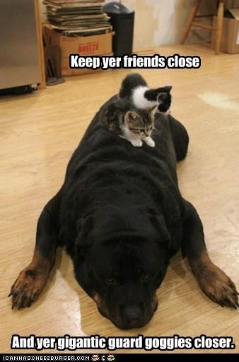 big defend friend guard dog huge protection rottweiler - 6301907968
