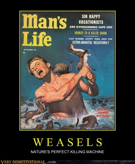 hilarious mans-life weasels wtf - 6302193664