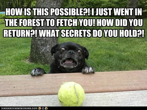 fetch dogs pug porch paranoid shocked tennis ball - 6302304768
