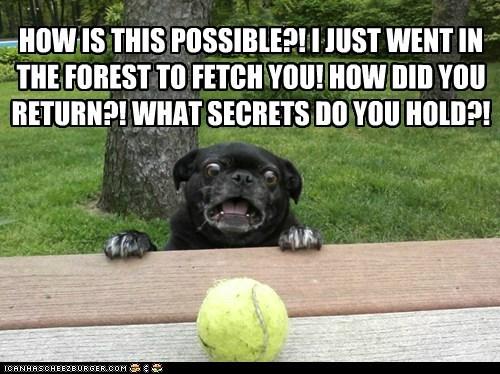 fetch pug porch paranoid shocked tennis ball - 6302304768