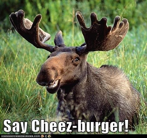 Cheezburger Image 6302799360