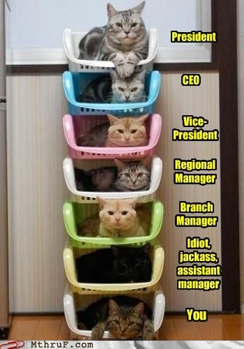 assistant manager,branch manager,Cats,ceo,Hall of Fame,lolcats,Office,office hierarchy,president,regional manager,vice president,vp