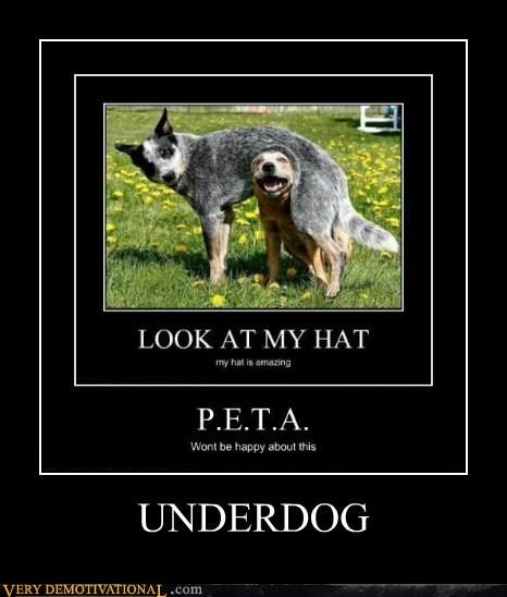 dogs hat hilarious peta underdog - 6302952960