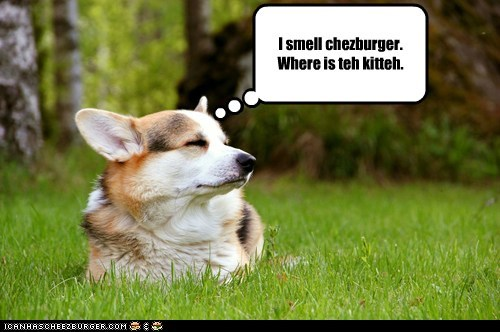 Cheezburger Image 6303179776