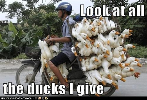 ducks,political pictures