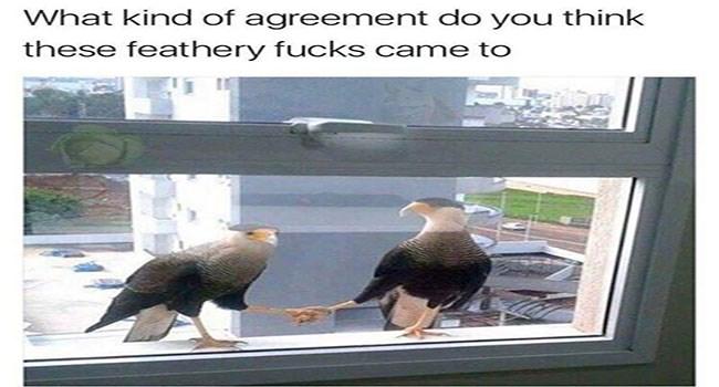 funny memes Memes animal memes animals - 6303237