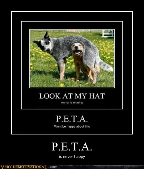 dogs hilarious not happy peta