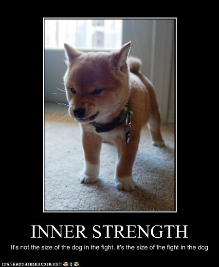 demotivational dogs fight rawr shiba inu