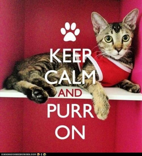 best of the week,Cats,keep calm,keep calm and carry on,purr,sayings,slogans