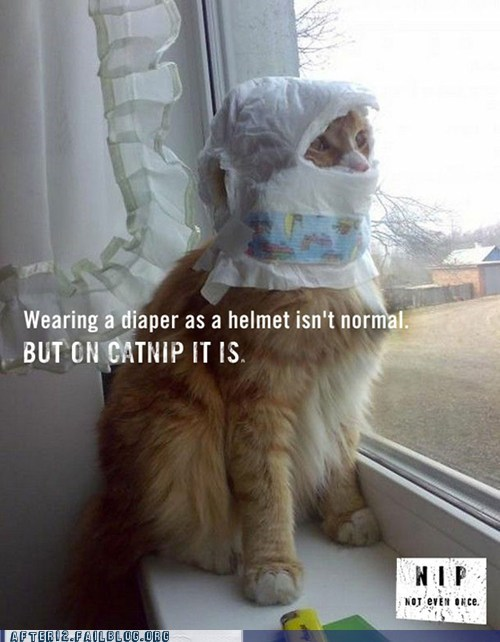 after 12,cat,catnip,crunk critters,diaper,g rated,helmet,kitty,meth,nip,Not Even Once