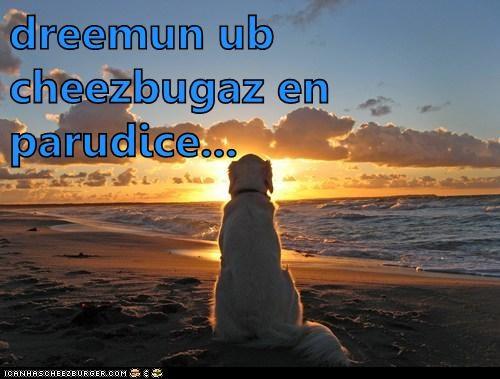 Cheezburger Image 6303572736