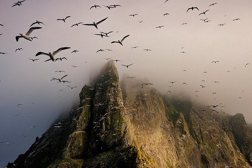 birds cliff mountain scotland sea - 6303708416