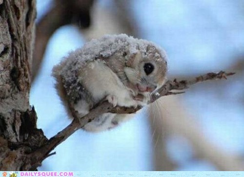 disguise,fairy,flying squirrel,japanese,snow,squee,sugarplums