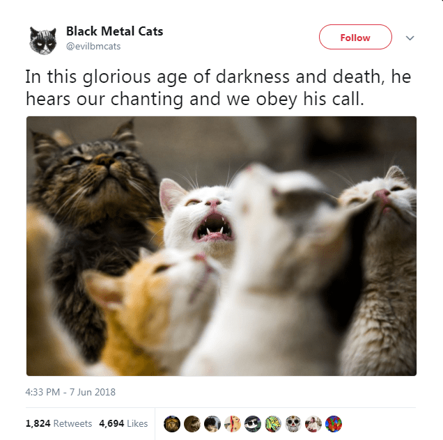 metal twitter lyrics photos Cats - 6304005