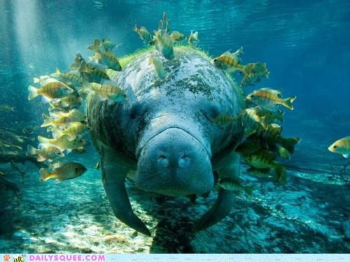 fish,friends,manatee,squee spree