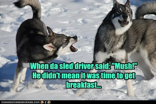 """When da sled driver said: """"Mush!"""" He didn't mean it was time to get breakfast..."""
