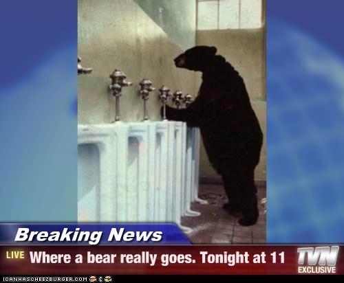 bathroom bear - 6304763136