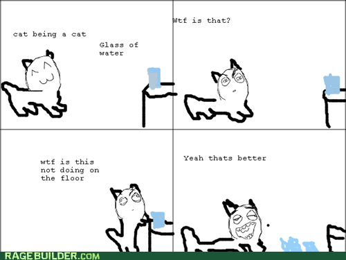 cat,pets,Rage Comics,water