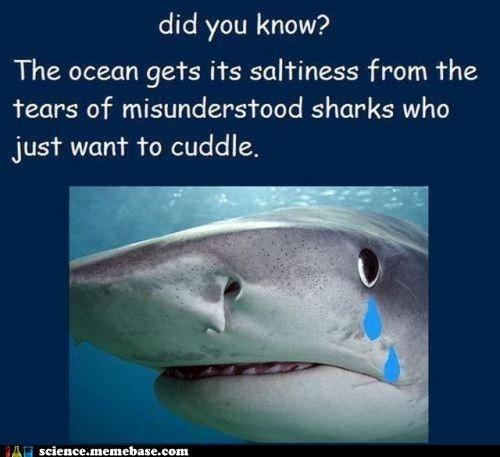 Fake Science Memes salt science shark tears - 6304941056