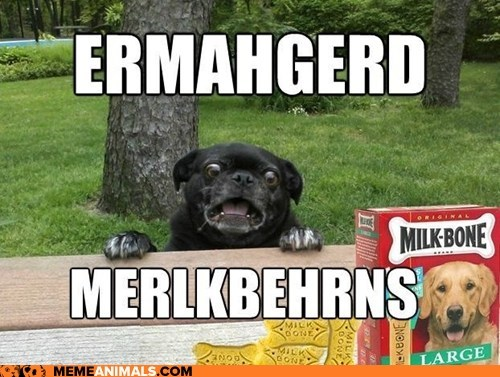 berks best of the week derp dogs Ermahgerd Hall of Fame Memes milkbones omg treats - 6304955392