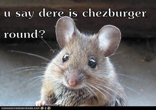 Cheezburger Image 6305035008