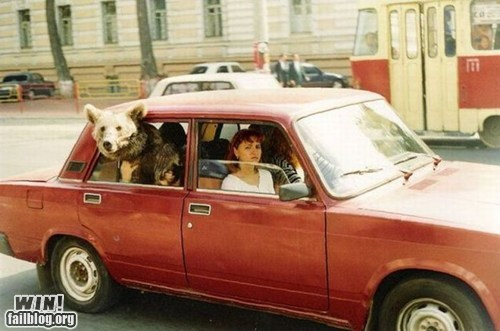 bear,car,only in russia,ride,whee