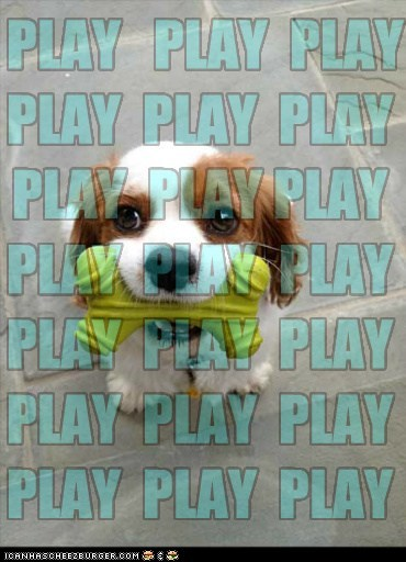 Cheezburger Image 6305209344